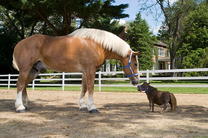 Thumbelina (right) with an average-sized horse